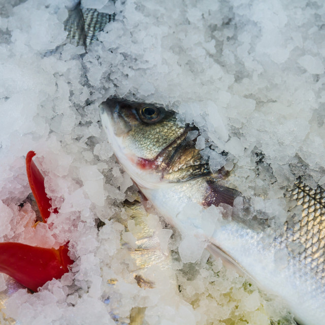 """Raw fish on fish market near restaurant"" stock image"