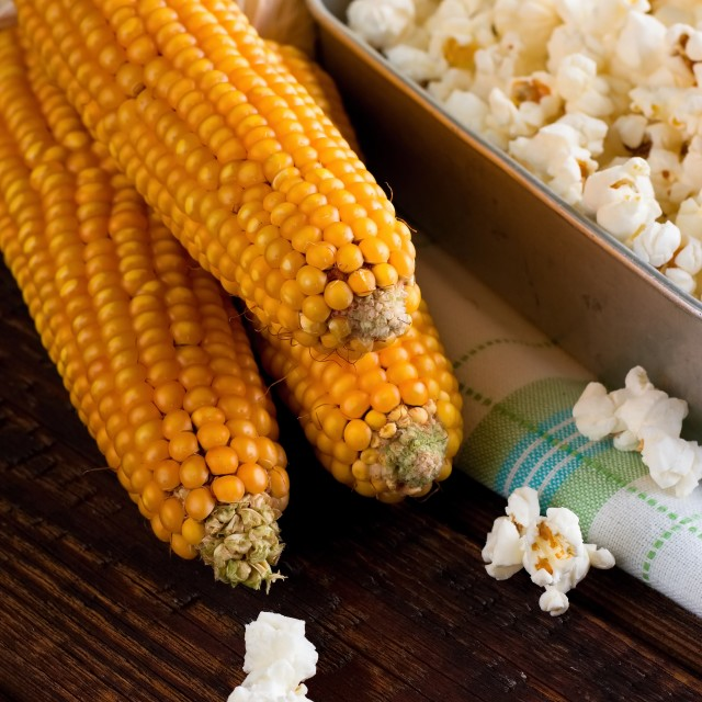 """Three corncobs next to pan with fresh popcorn"" stock image"