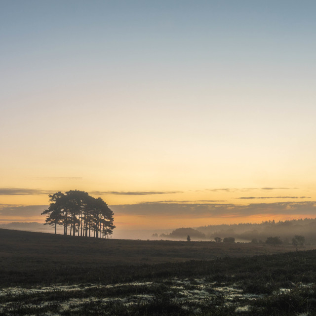 """Woodford Bottom Dawn"" stock image"