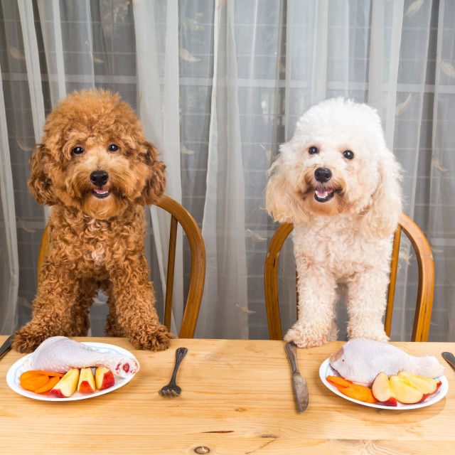 """Concept of excited dogs having delicious raw meat meal on table."" stock image"