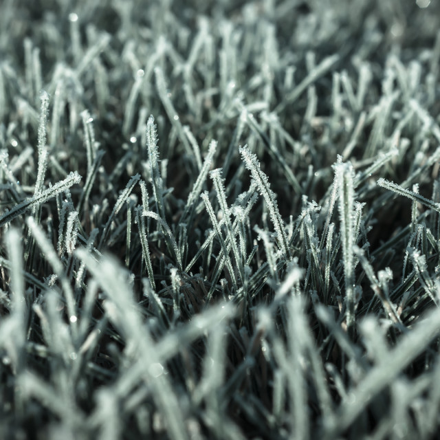 """Fall - below zero, first frost on the lawn"" stock image"