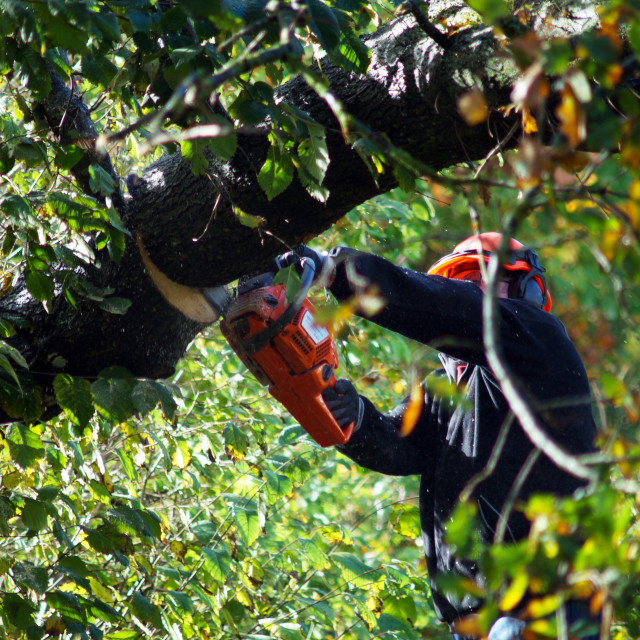 """""""Lumberjack sawing tree"""" stock image"""
