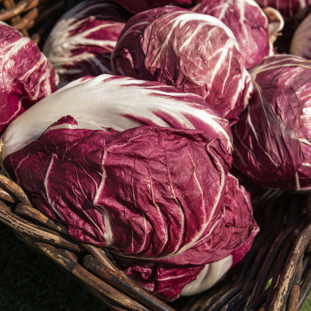 """Red cabbage"" stock image"