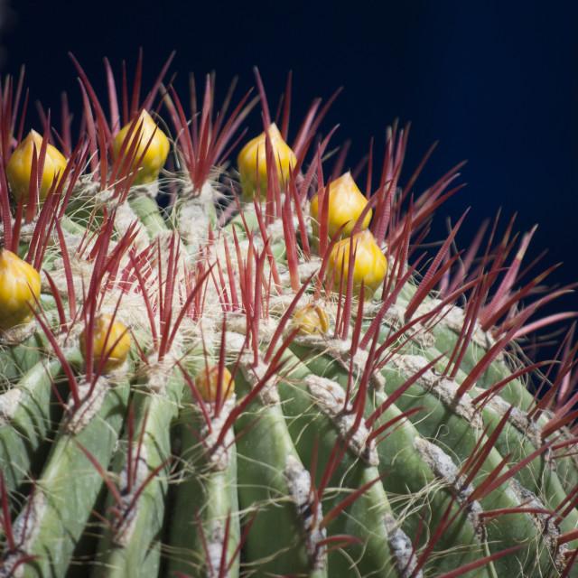 """""""close up shot of a cactus"""" stock image"""