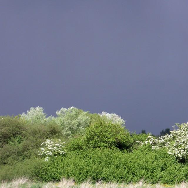 """Dark skies over sunny field"" stock image"