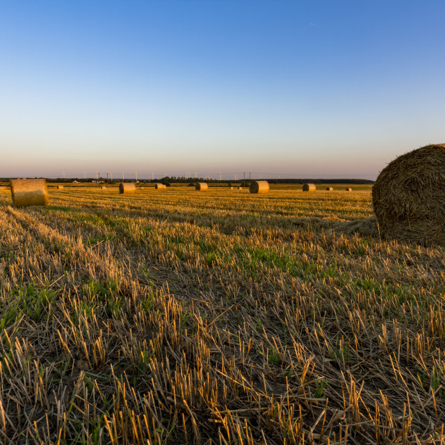 """Hay bales on the field"" stock image"