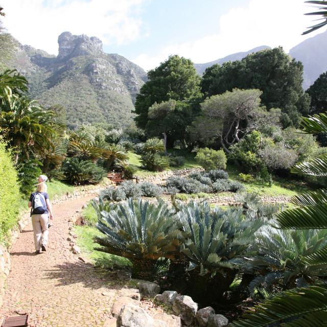 """""""Kirstenbosch Botanical Gardens garden Cape Town South Africa African RSA"""" stock image"""