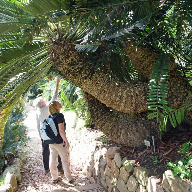 """Kirstenbosch Botanical Gardens Cape Town South Africa"" stock image"