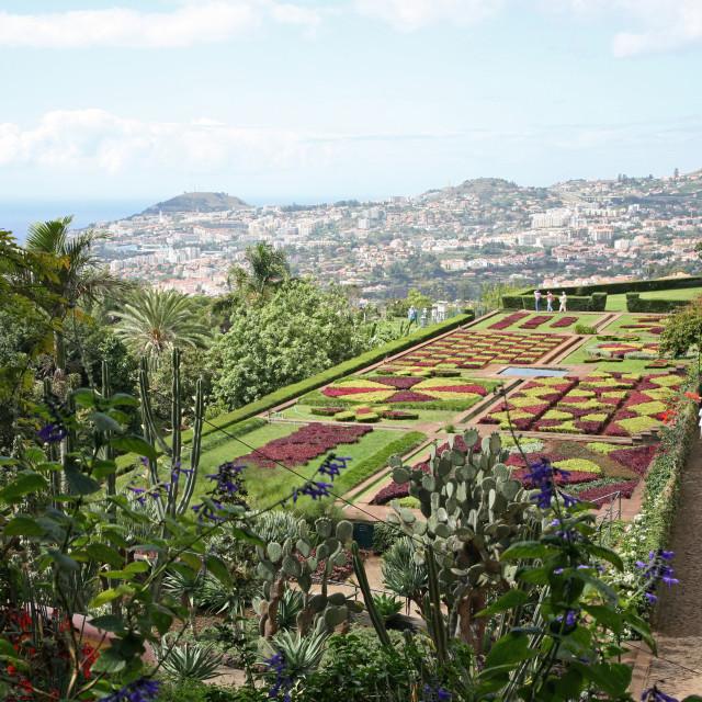 """Gardens of the Jardim Botanico, Funchal, Madeira, Portugal"" stock image"