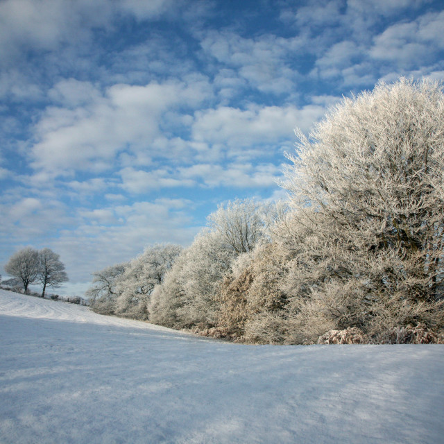 """""""Frost covered trees in winter taken at Target Wood, Kidsgrove, Stoke-on-Trent, Staffs, England"""" stock image"""