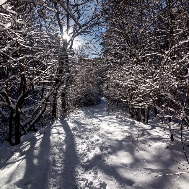 """Snowy path"" stock image"