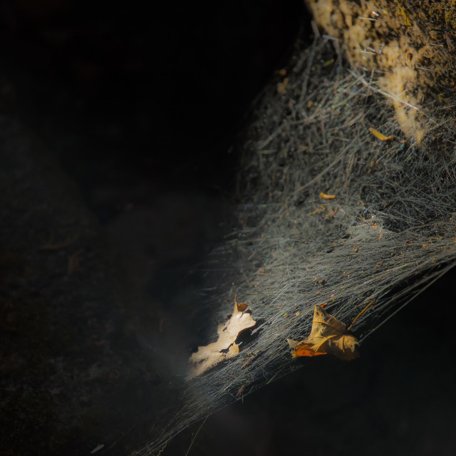 """Spider's Web"" stock image"