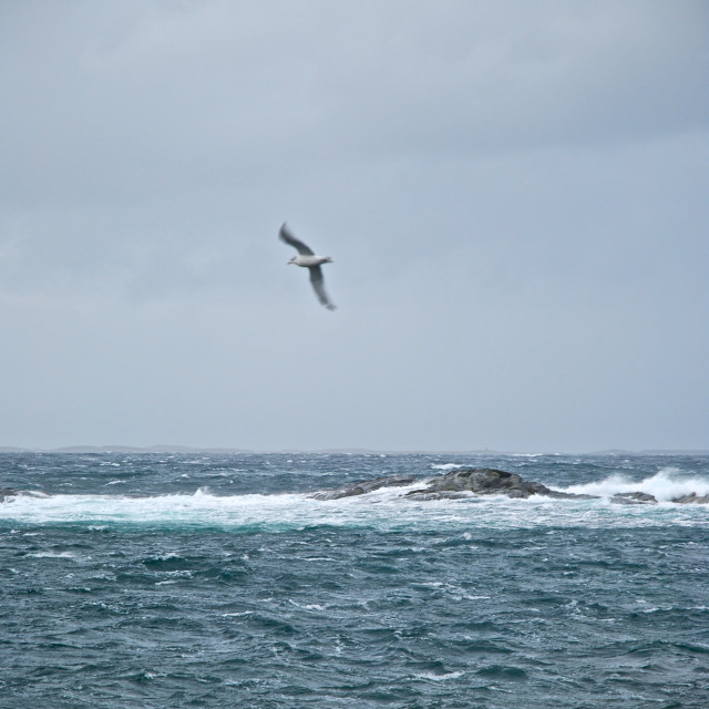 """""""Seagull over stormy sea"""" stock image"""