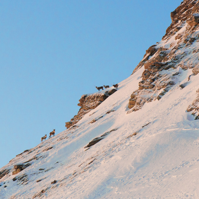 """""""Reindeer in the mountains"""" stock image"""