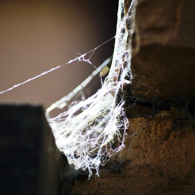 """Tangled Web"" stock image"