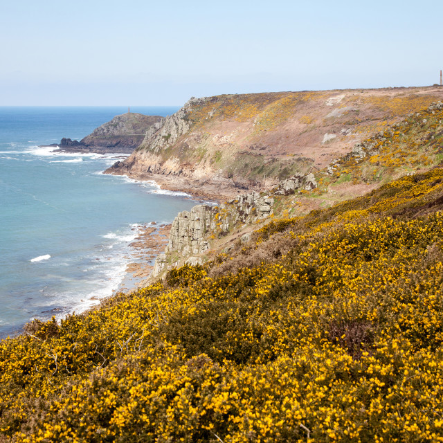 """""""The rocks and cliffs with yellow gorse flowers in the foreground and Cape Cornwall in the background, Cornwall, England, UK"""" stock image"""