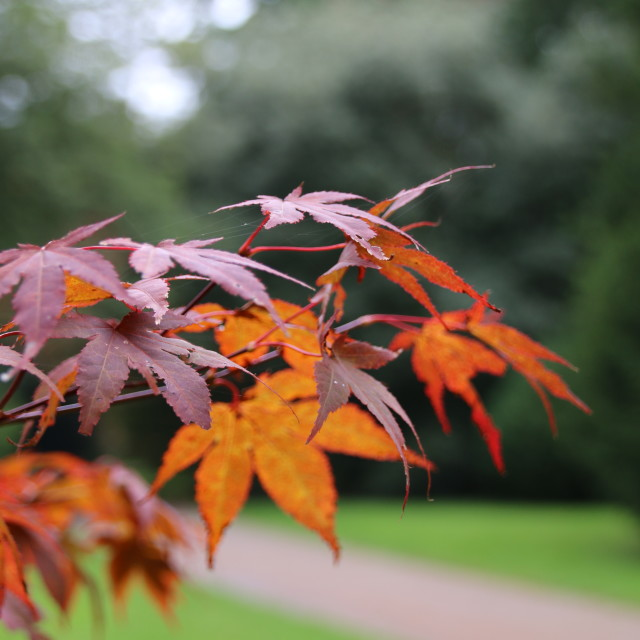 """Leaves in Autumn"" stock image"