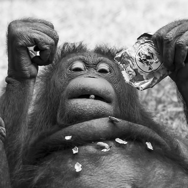 """Pay peanut get monkey"" stock image"