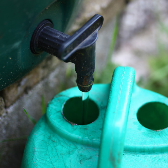 """""""Water from a water butt filling a watering can for irrigation conserving water"""" stock image"""