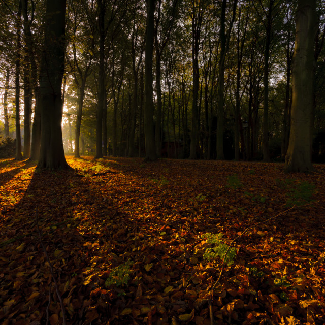 """""""Autumn in the Netherlands"""" stock image"""