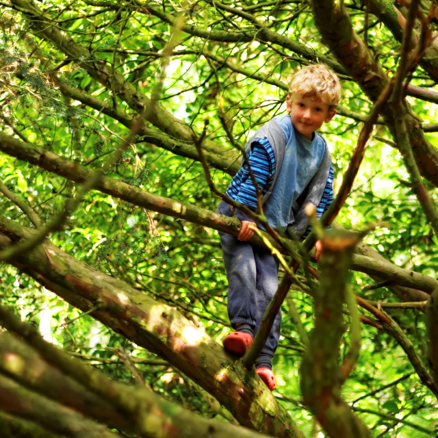 """""""Young Boy Playing In Tree"""" stock image"""