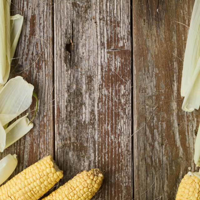 """""""Corn with corn husk surrounding rustic wooden table sample text"""" stock image"""