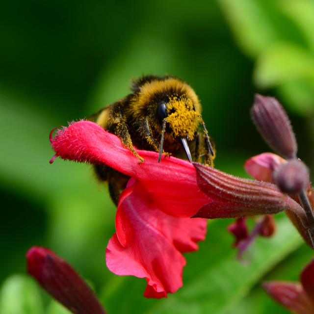 """""""Close up image of a Bee"""" stock image"""