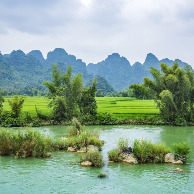 """River and green rice field"" stock image"