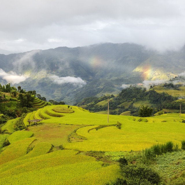 """Terraced field"" stock image"