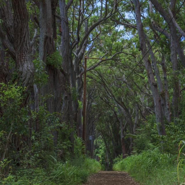 """Hawaii hiking trail"" stock image"
