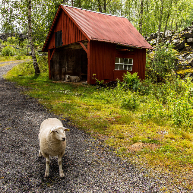 """""""Lambs home - Welcome"""" stock image"""
