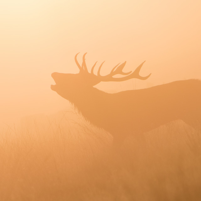 """'The Rut' Sunrise at Richmond Park"" stock image"