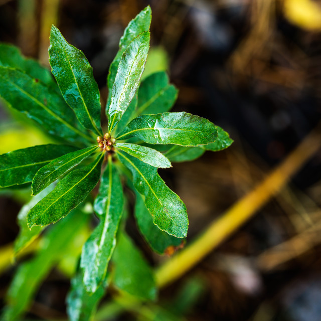 """""""Close up of green foliage with water from the morning dew"""" stock image"""