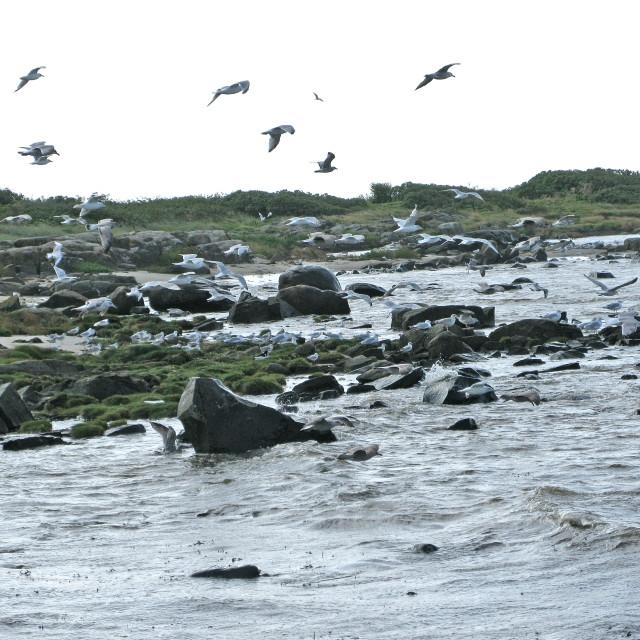 """""""Skrea Strand Falkenberg birdlife"""" stock image"""