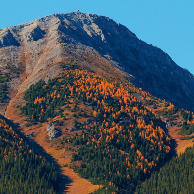 """""""Mt. Sarrall with lovely Larches"""" stock image"""
