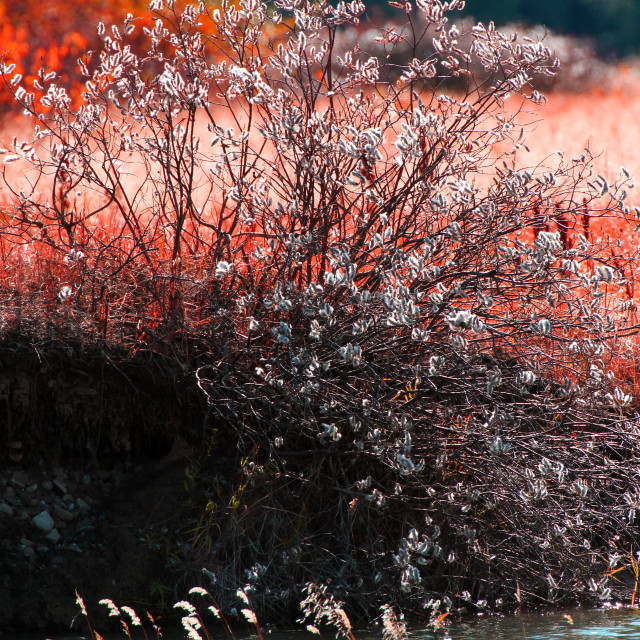 """""""Red of Fall on the lakeside"""" stock image"""