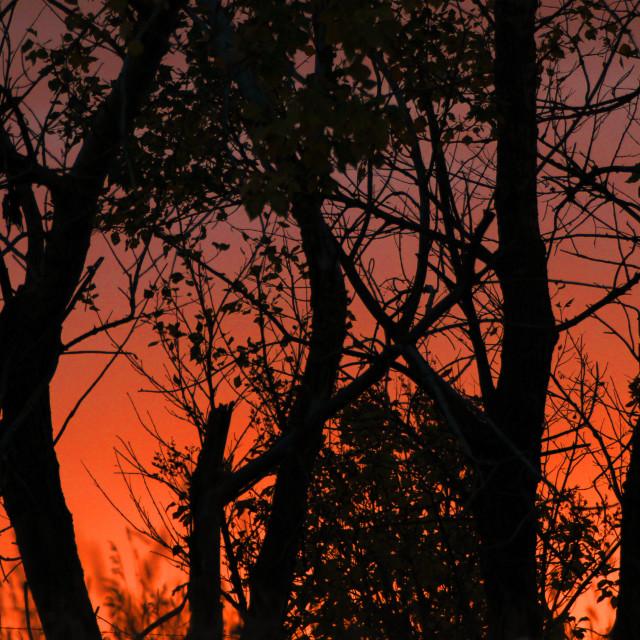"""Blood Moon Sunset"" stock image"