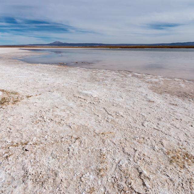 """""""Salt flats at Laguna Chaxa, Atacama desert"""" stock image"""