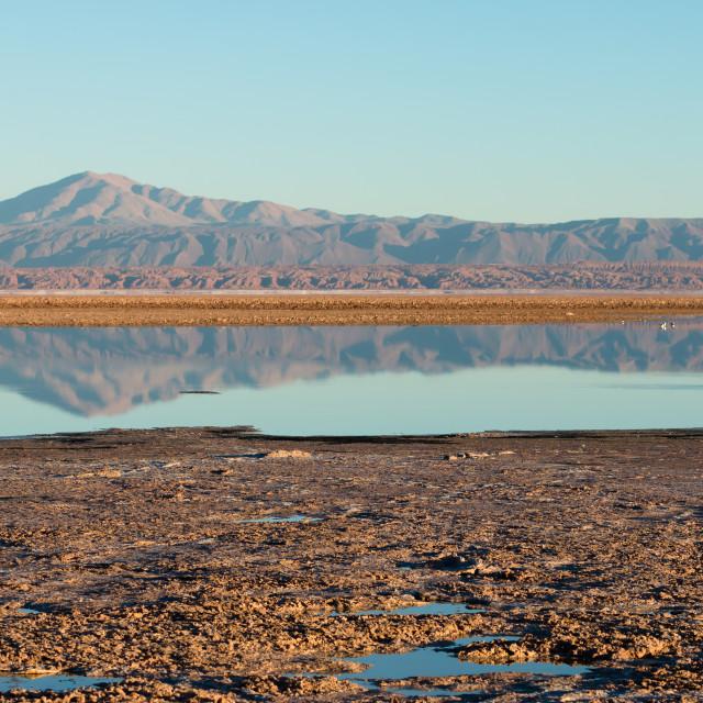 """Flamingo reflections, Laguna Chaxa"" stock image"