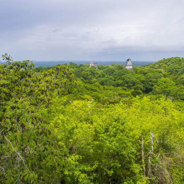 """Tikal National Park"" stock image"