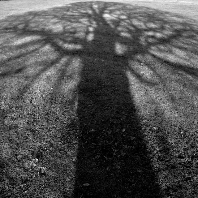 """""""Shadow of large tree"""" stock image"""