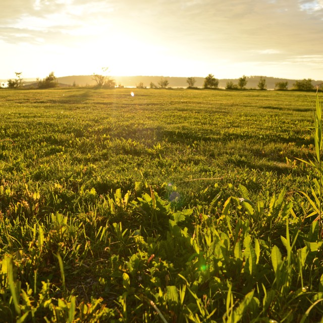 """""""Field in sunset"""" stock image"""