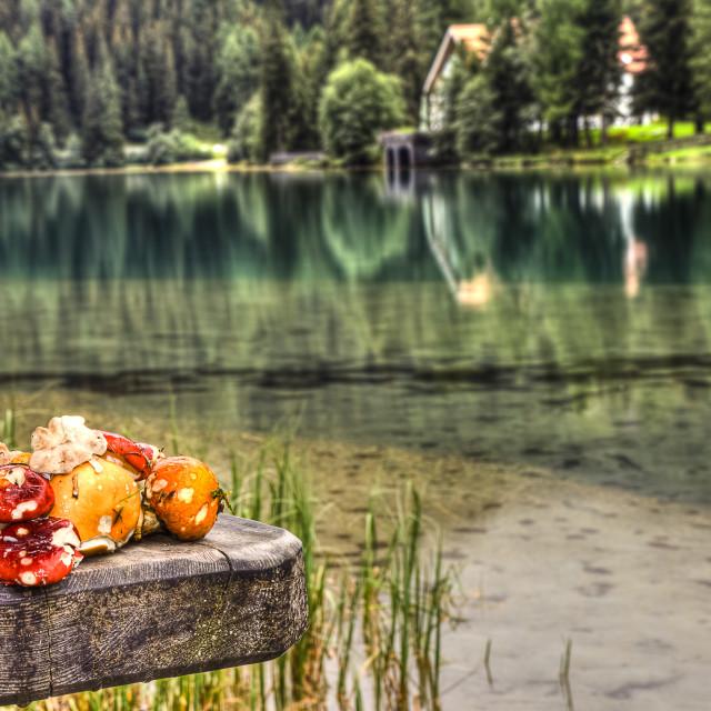 """mushrooms of the woods surrounding the anterselva lake"" stock image"