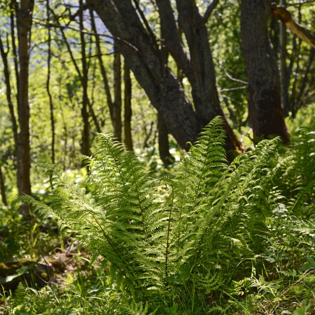 """""""plant in forest"""" stock image"""