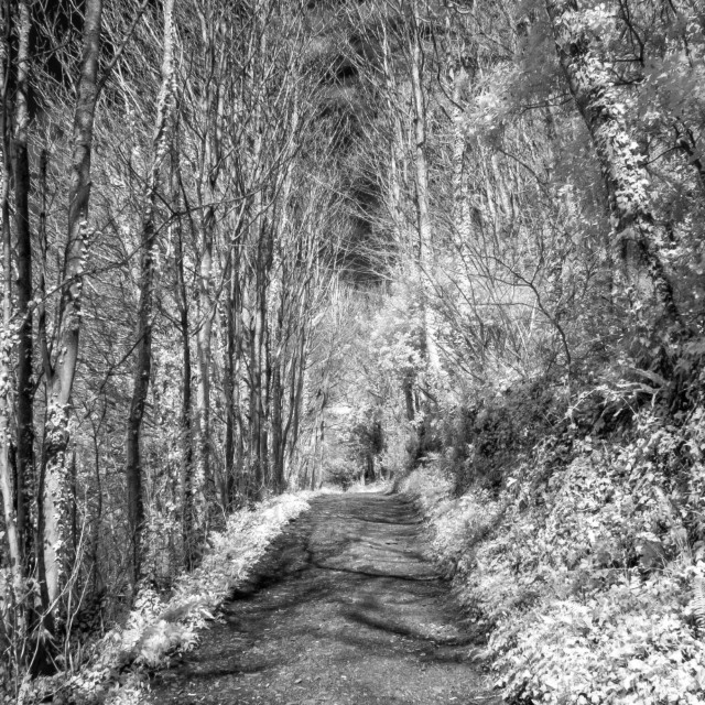"""Tree-lined pathway"" stock image"
