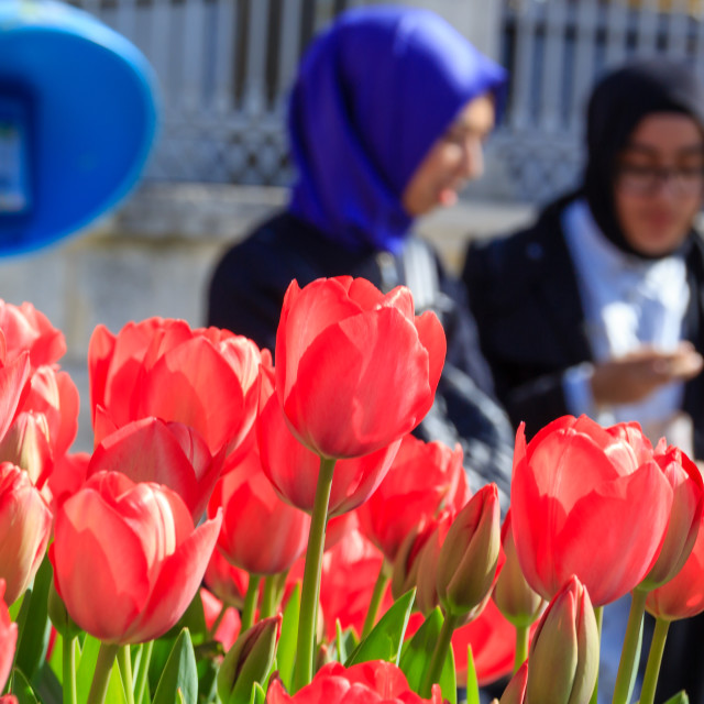 """Tulips festival"" stock image"
