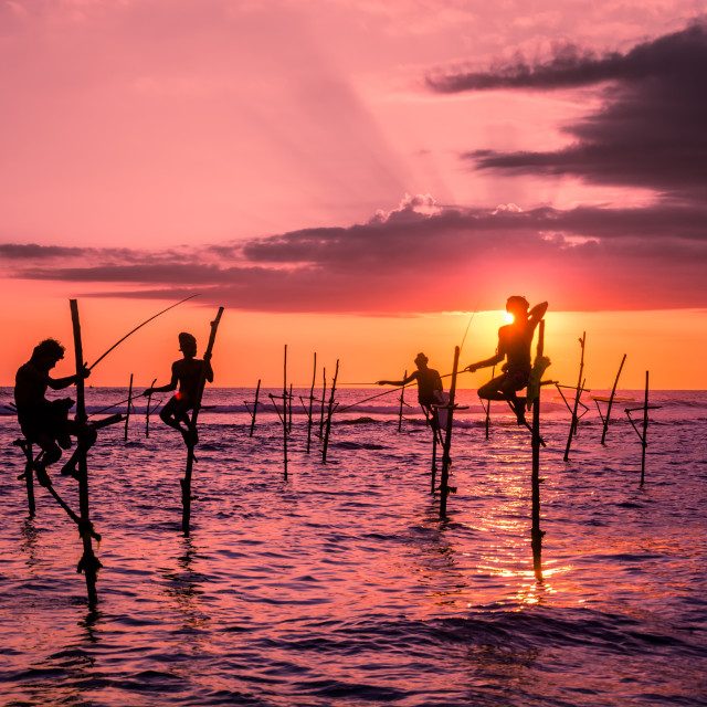 """Traditional Stilt fishing in Srilanka"" stock image"