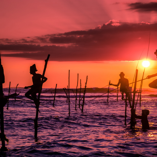 """Traditional Stilt fishing in Srilanka"" stock image"