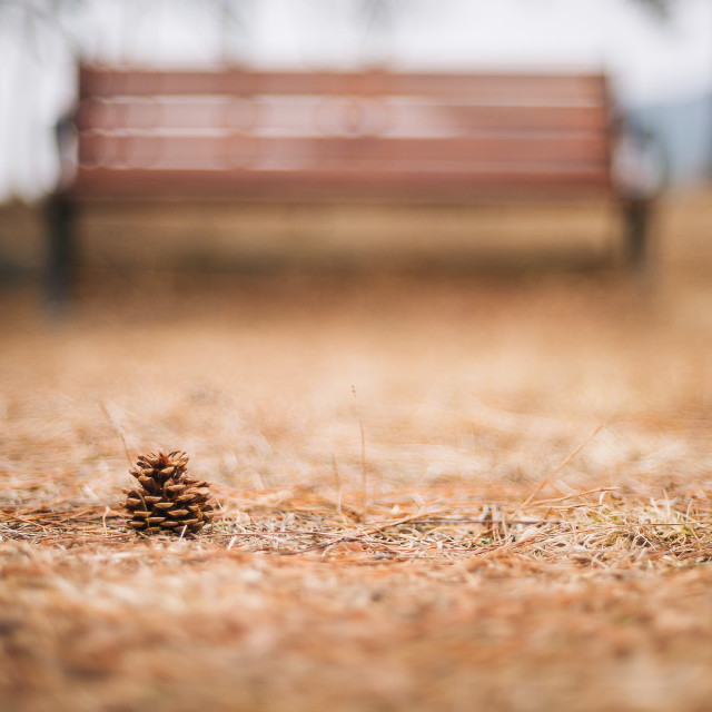 """Pinecone in the Park"" stock image"