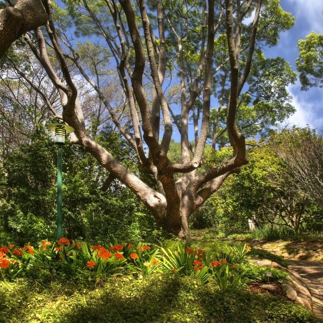 """Kirstenbosch National Botanical Gardens 1"" stock image"